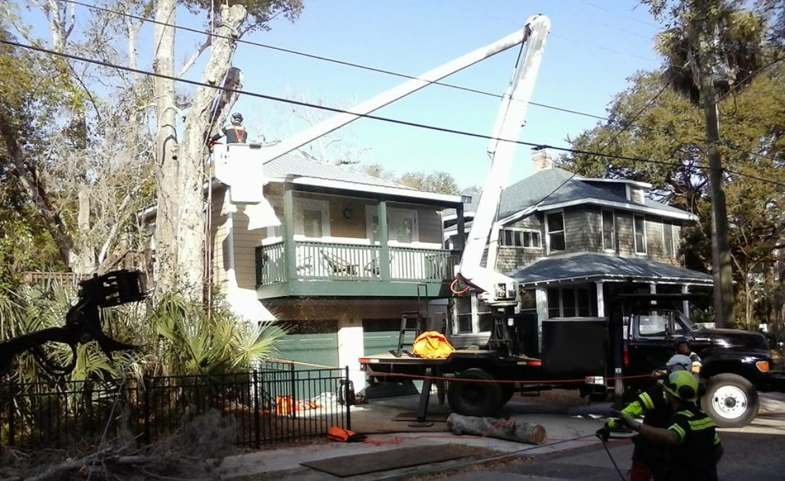 emergency tree removal service in jacsonville