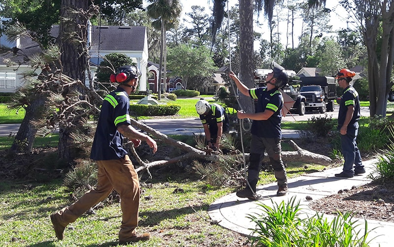 24 Hour Tree Removal Service St. Augustine