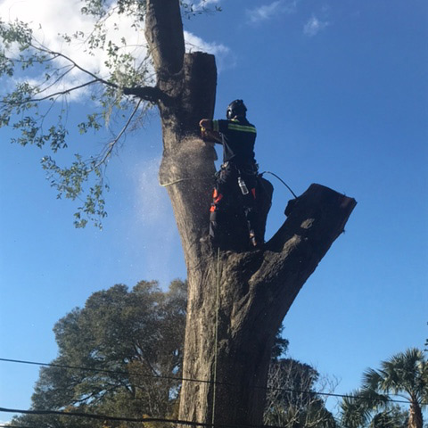 tree removal jacksonville fl
