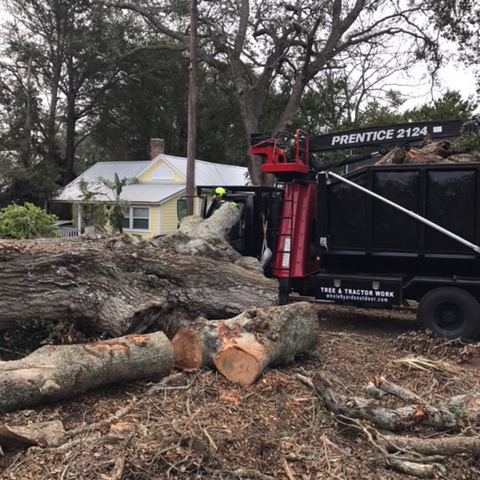 tree removal service st augustine