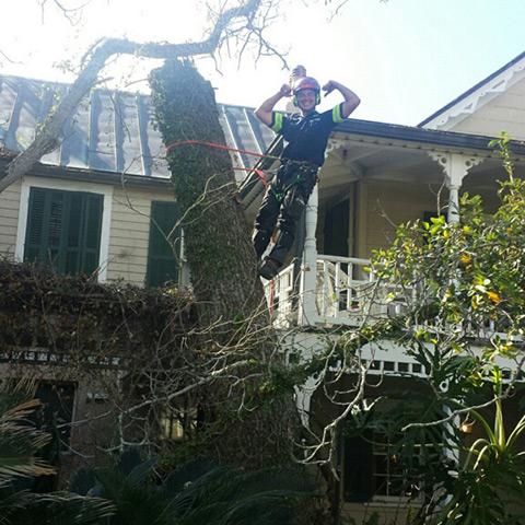 Tree service Jacksonville