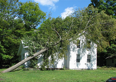 emergency tree services st augustine