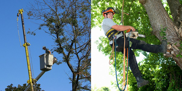 tree cutting services jacksonville and st augustine