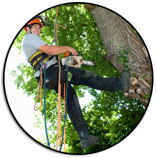 tree removal service jacksonville and st augustine fl
