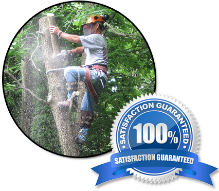 Tree Trimming services jacksonville fl