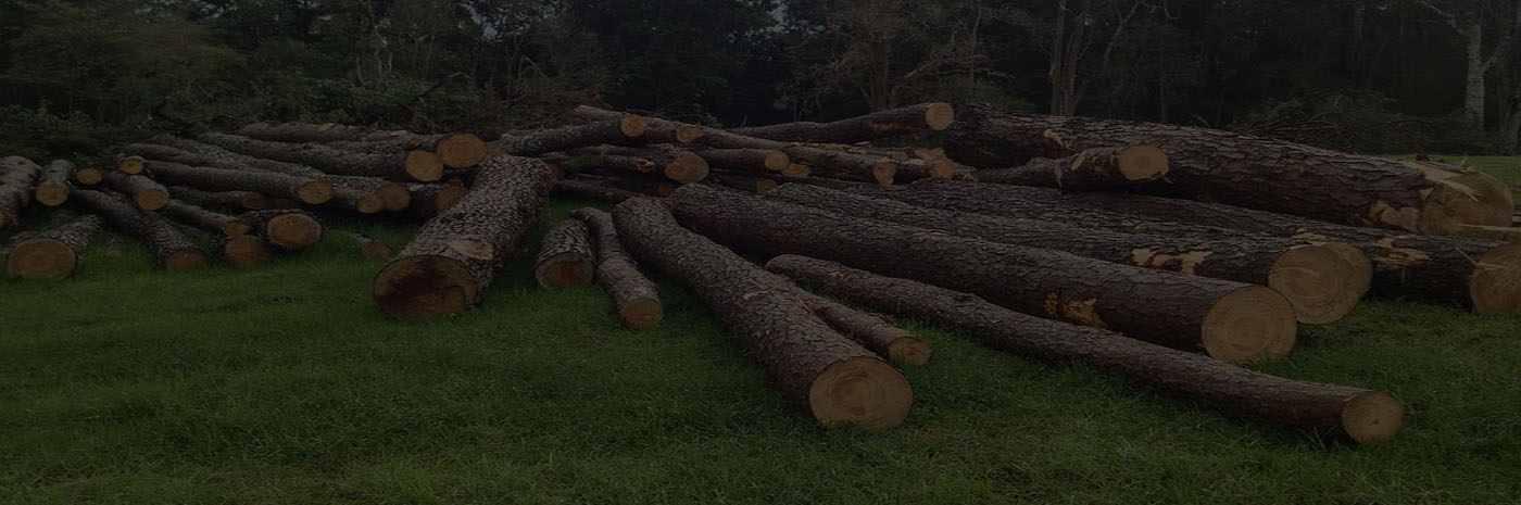 tree services st augustine