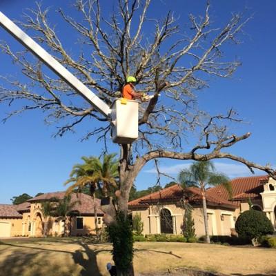 Dead Tree Removals