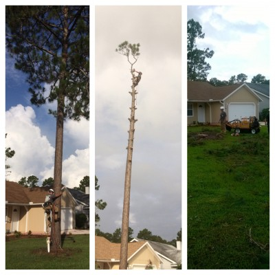 Tree Service Near a Home