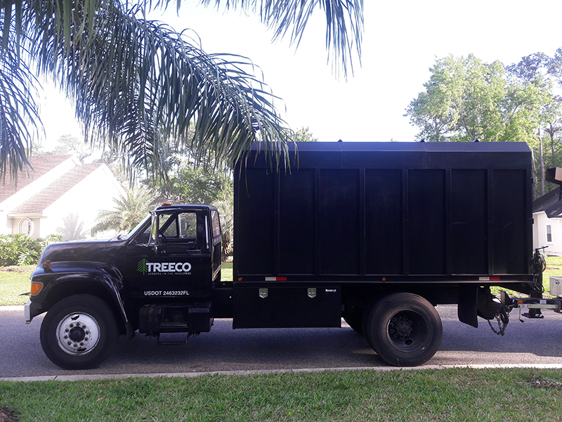professional tree services in Jacksonville and St. Augustine