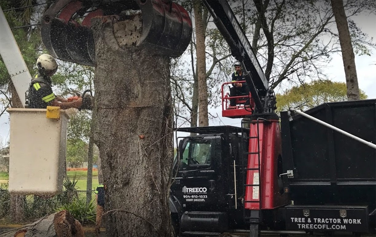 TREECO Tree Removal Service removing a large tree in Jacksonville