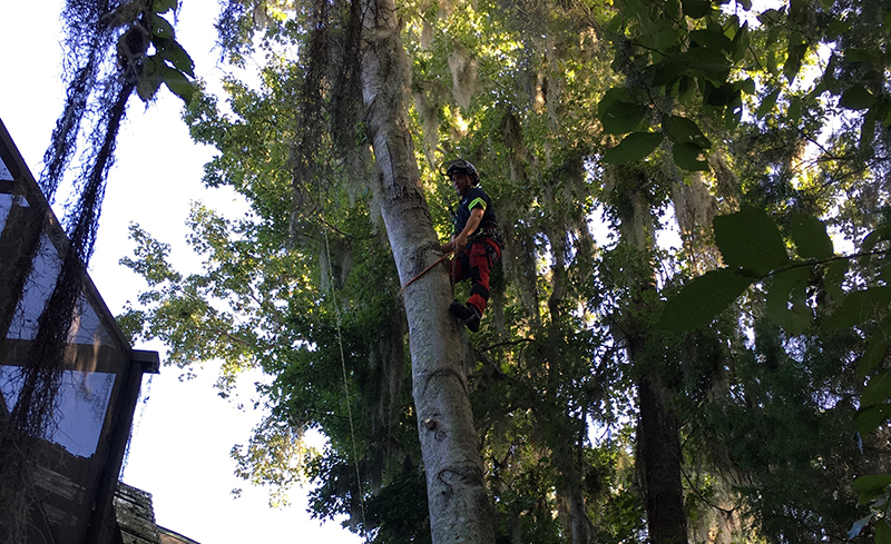TREECO for emergency tree service in Jacksonville and St. Augustine