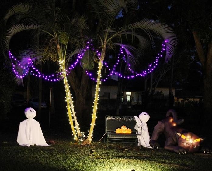 Enchanting Palm Trees