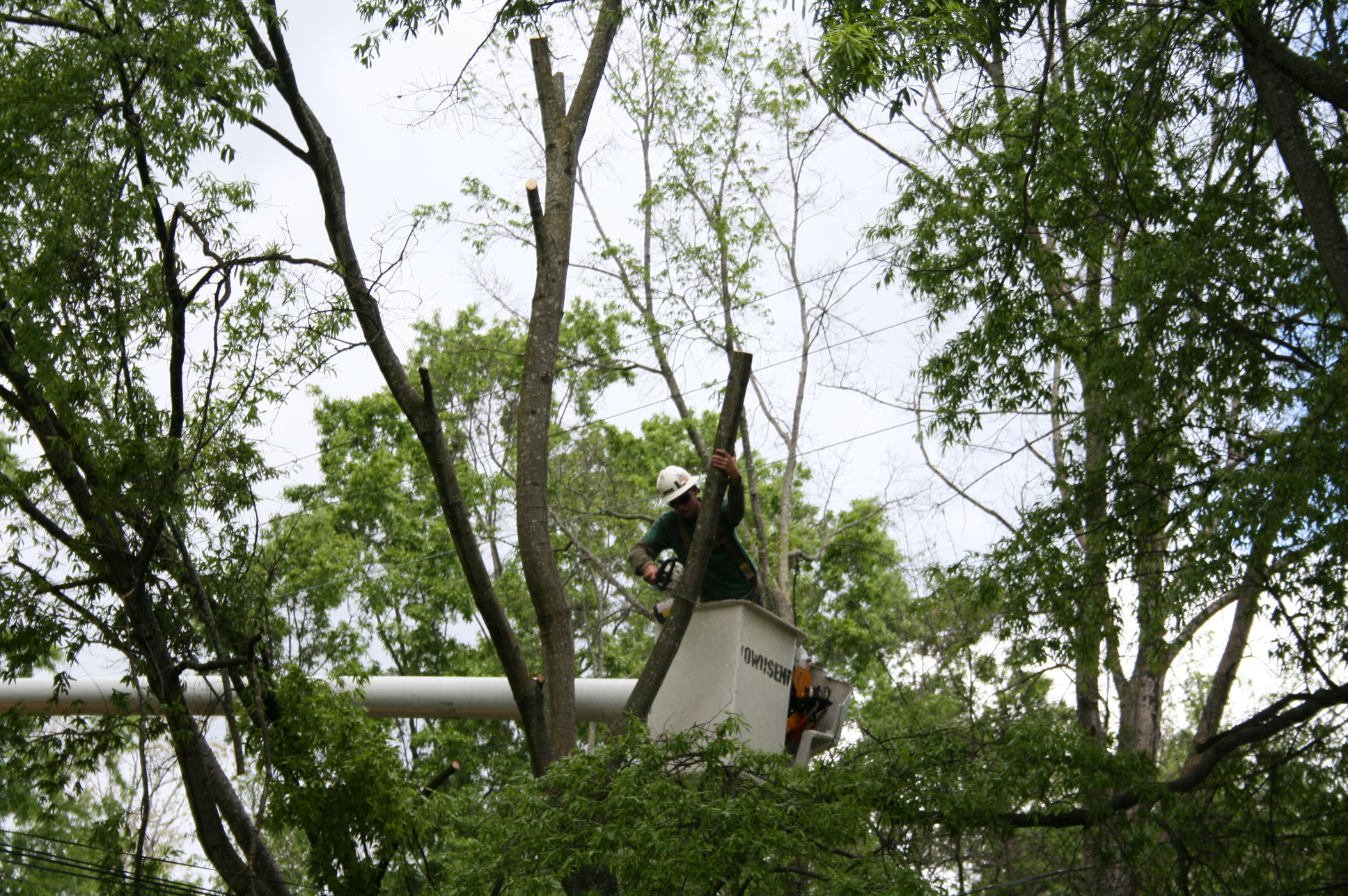 Image Showing Are Homeowners Liable for Tree Care Accidents in Jacksonville, FL?